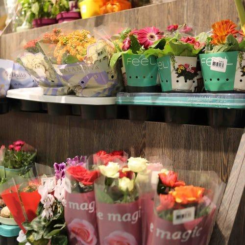 Présentoir Plantes et Fleurs