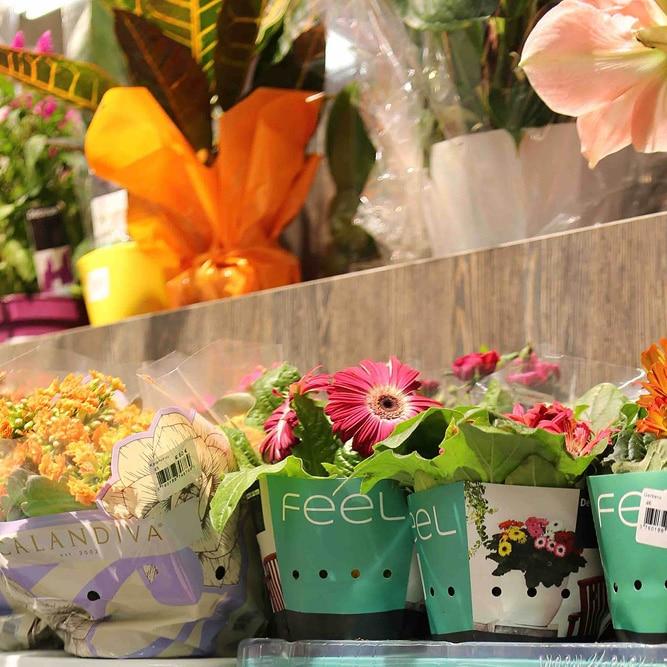 mobilier fleurs